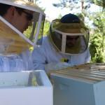 09-bee-suites