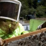 11_beekeeper_dick