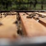 12_dof_bees