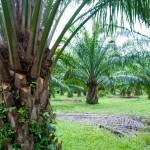 01 palm farm