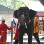 02_elephant_thailand