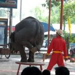03_elephant_thailand