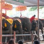 04_elephant_thailand