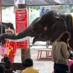 05_elephant_grabbing_money