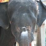 06_elephant