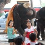 07_elephant_dancing
