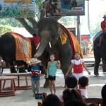 08_elephant_dancing