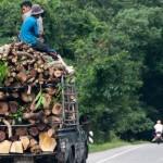 10 lumber