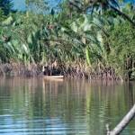 12 seining river thailand